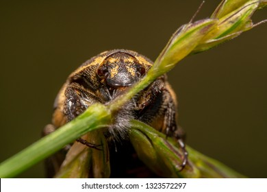 Light colour Varied carpet beetle Anthrenus verbasci sitting on a green plant shot from bottom up