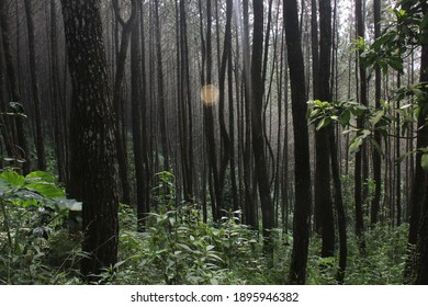 a light coming from a gap of trees in the middle of the forest at bandung