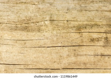 Light, cracked, wooden log - textured, dirty, background.