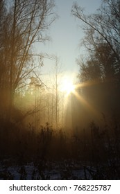 light in a dark forest