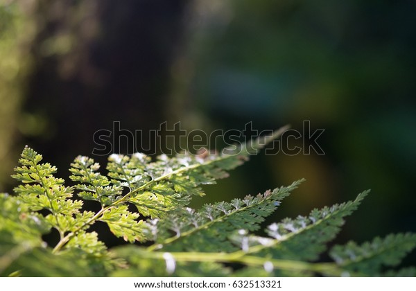 Light at the end of the fern