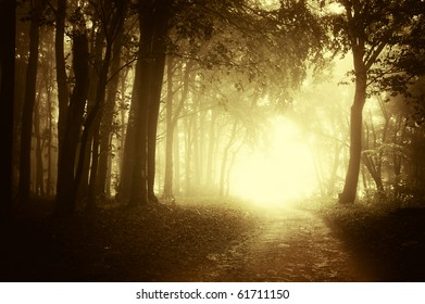 light at the end of a forest road in autumn