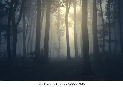 light in foggy forest background
