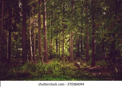 Light in the Forrest