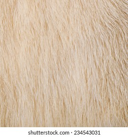 light fur, texture, abstract background