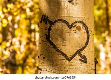 Light glowing on carved heart in Aspen tree trunk