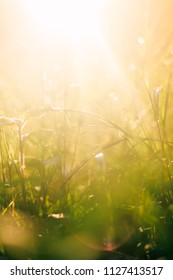 Light hits the grass in the morning after rain