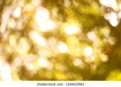 The light from the leaves in the morning is a bokeh light.