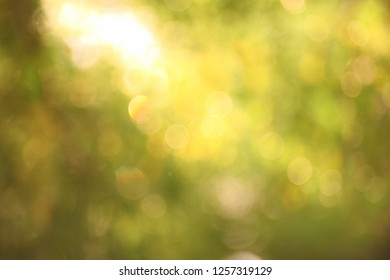 The light from the leaves in the morning is a bokeh light