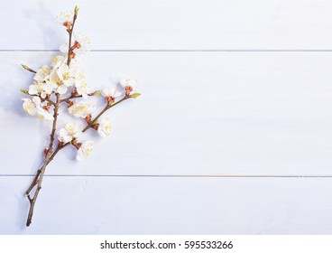 Light lilac wooden background with flowering apricot branches.