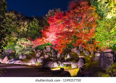 Light up at night, Autumn scenery of maple trees by majestic traditional Japanese architectures in  Shinto Shrine, Kyoto, Japan Maple is change the color to seasonal  and leaf lighted up in garden