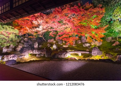 Light up at night, Autumn scenery of maple trees by majestic traditional Japanese architectures in Shinto Shrine, Kyoto, JapanMaple is change the color to seasonal  and leaf lighted up in garden