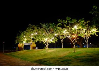 Light on the tree at night.