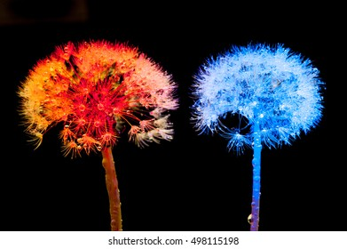 Light Painting of Dandelion Seeds covered with water drops - Light painting with LED Lights - Light Art Photography