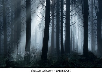 Light passing through the trees during a foggy day in the woods.