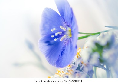 light photo of a gentle blue flower of wild geranium on a white smoky background, side view close-up