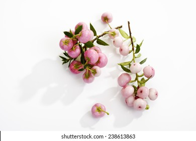 Pernettya Pink.Light Pink Berries Pernettya Mucronata Stock Photo Edit Now 238613863