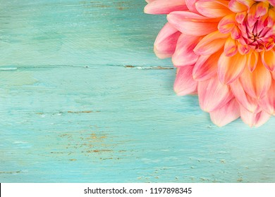 light pink dahlias with drops of water, macro. place for text