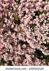 Light Pink Floral Background