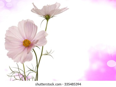 light pink flowers on a abstract background