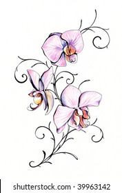 Light pink orchid separate on white background.Picture I have created myself with colored pencils.