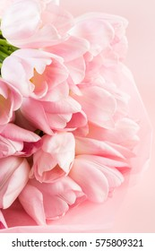 Light pink tulips on a pink background.