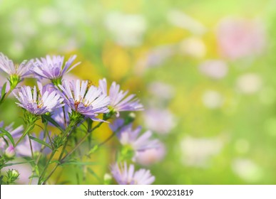 Light purple flowers with dew drops on it outdoor in spring time