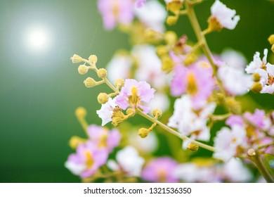 Light purple flowers for wedding decoration