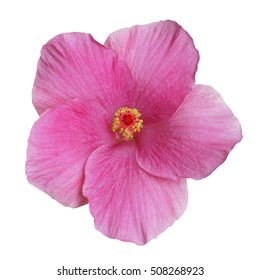 Light purple Hibiscus on white background with path