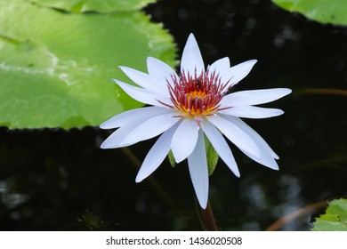 Lotus Flower Meaning In Buddhism Images Stock Photos Vectors