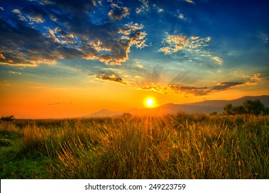Light rays filling up the sky in an orange summer field.