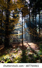 Light rays in the woods