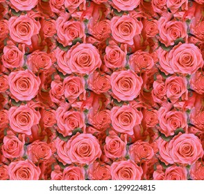 light red roses seamless background macro