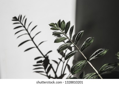 Light and shadow of leaf on a gray background. Lifestyle choice concept.ndividuality and uniqueness concept.