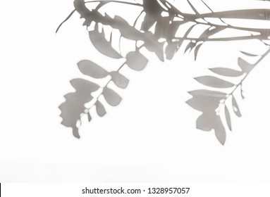 Light and shadow of leaf on a gray background. Lifestyle choice concept.ndividuality and uniqueness concept