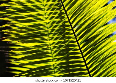 light and shadow of palm leaves