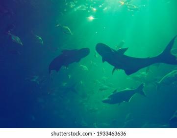 light shine down to the underwater world
