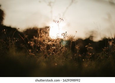 The light shining on the grass in the evening