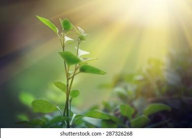 Licht, das auf einer grünen Spur leuchtet, nachhaltige Energie