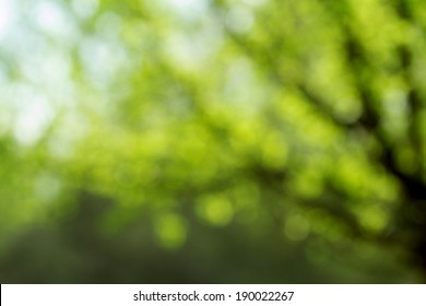 Light shining on tree leaves