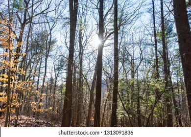 Light shining through the trees in a colorful forest with the leaves changing. Fall/winter seasonal background