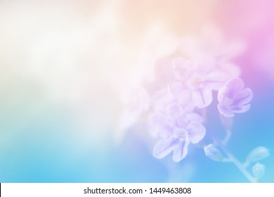 light soft bright sweet color for cool abstract nature background. flower made by pastel color filter for background.