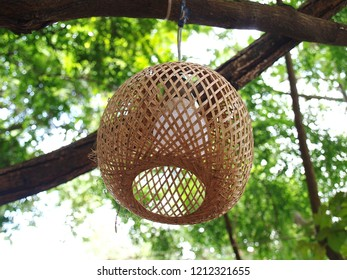 Light straw shade or Lampshades hanging on a single wire, bare branches On a blurred green background.