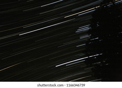 Light streaks of stars in night sky with evergreen on right