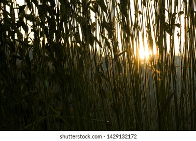 Light of the sunsets and beautiful nature, fence and silhouette of annual crops, looking at the sun and orange light
