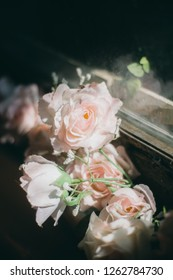 The light that makes the rose beautiful.