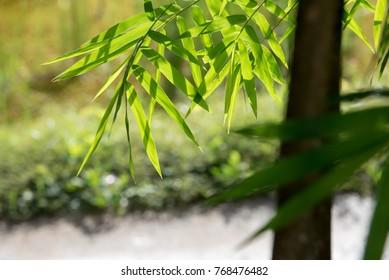 light through bamboo leaves