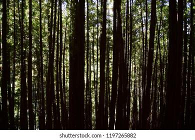 light through the dark forest