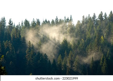 Light through patches of fog in the forest, near Prince George, British Columbia, Canada