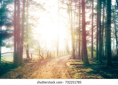 light and trees